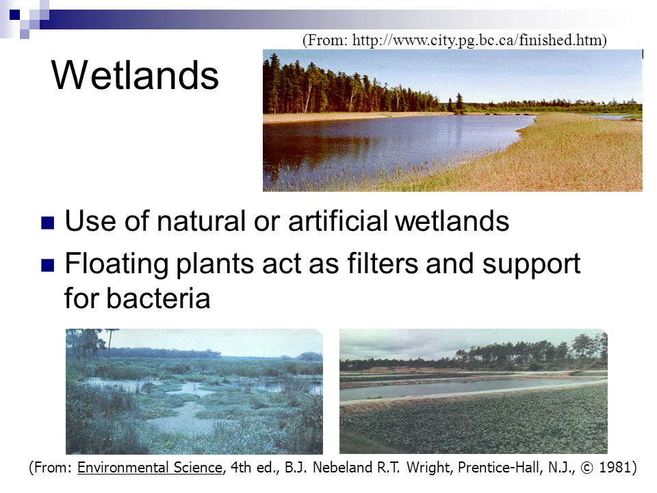Wetlands Use of natural or artificial wetlands Floating plants act as filters and support for bacteria (From: Environmental Science, 4th ed., B.J. Neb