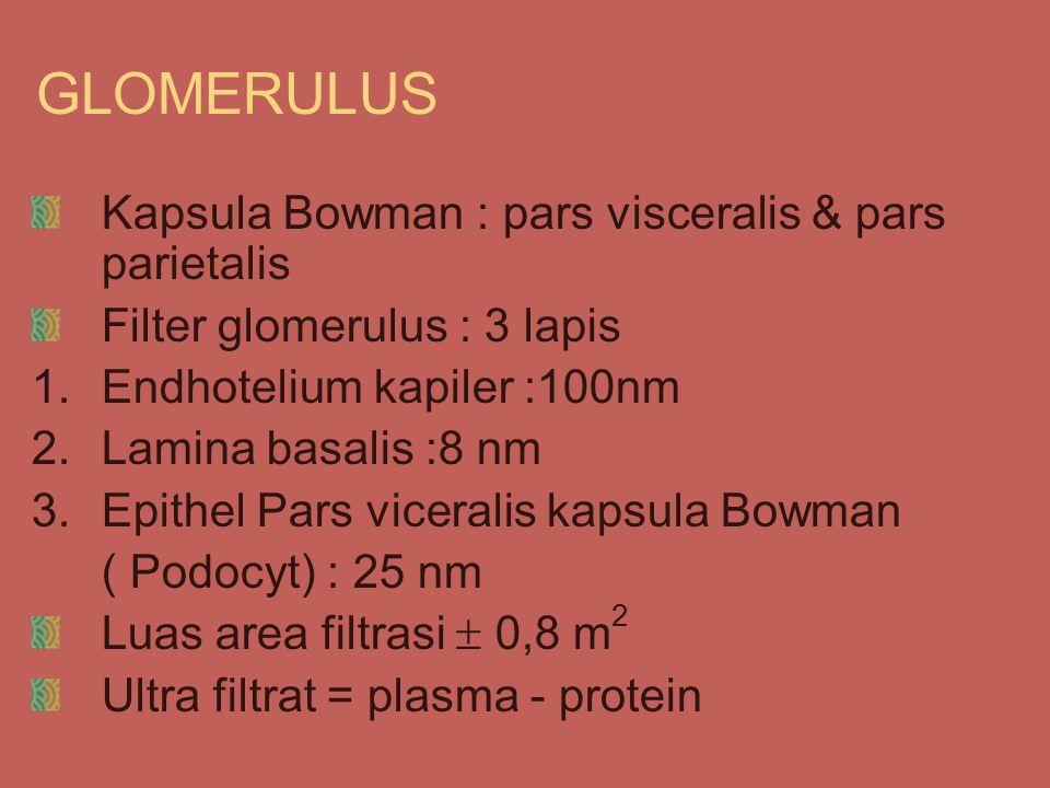 GLOMERULUS Kapsula Bowman : pars visceralis & pars parietalis Filter glomerulus : 3 lapis 1.Endhotelium kapiler :100nm 2.Lamina basalis :8 nm 3.Epithel Pars viceralis kapsula Bowman ( Podocyt) : 25 nm Luas area filtrasi  0,8 m 2 Ultra filtrat = plasma - protein