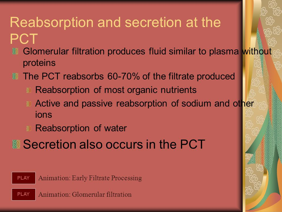 Glomerular filtration produces fluid similar to plasma without proteins The PCT reabsorbs 60-70% of the filtrate produced Reabsorption of most organic
