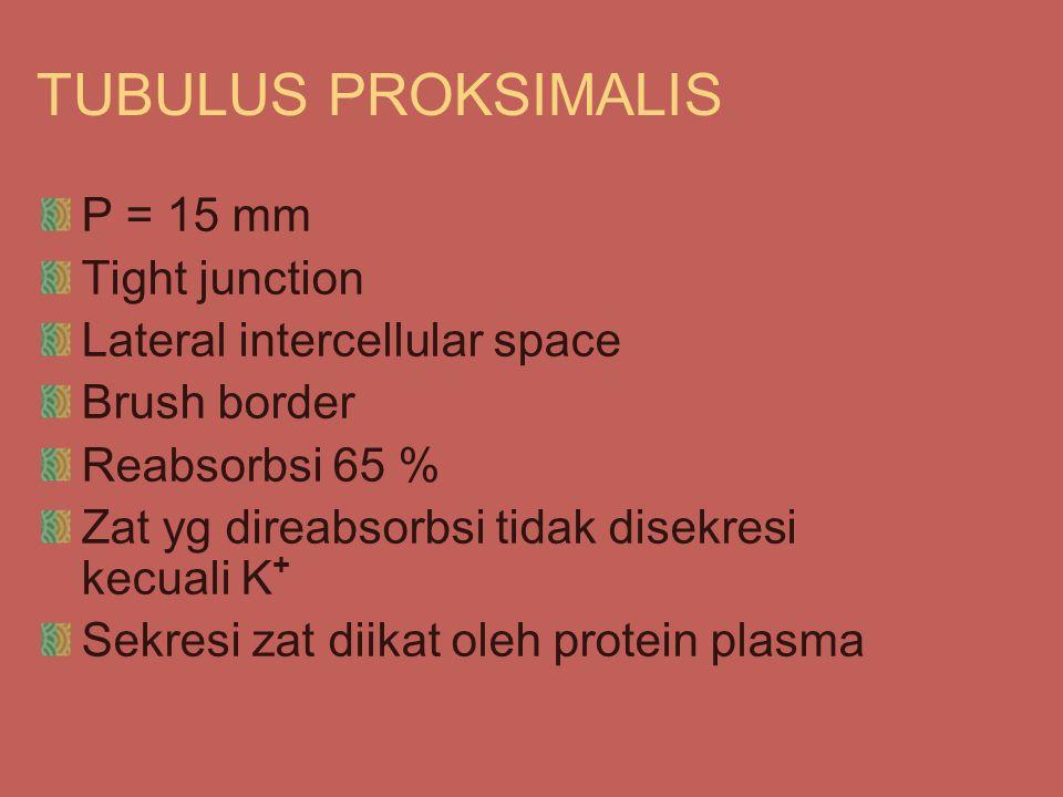 TUBULUS PROKSIMALIS P = 15 mm Tight junction Lateral intercellular space Brush border Reabsorbsi 65 % Zat yg direabsorbsi tidak disekresi kecuali K + Sekresi zat diikat oleh protein plasma