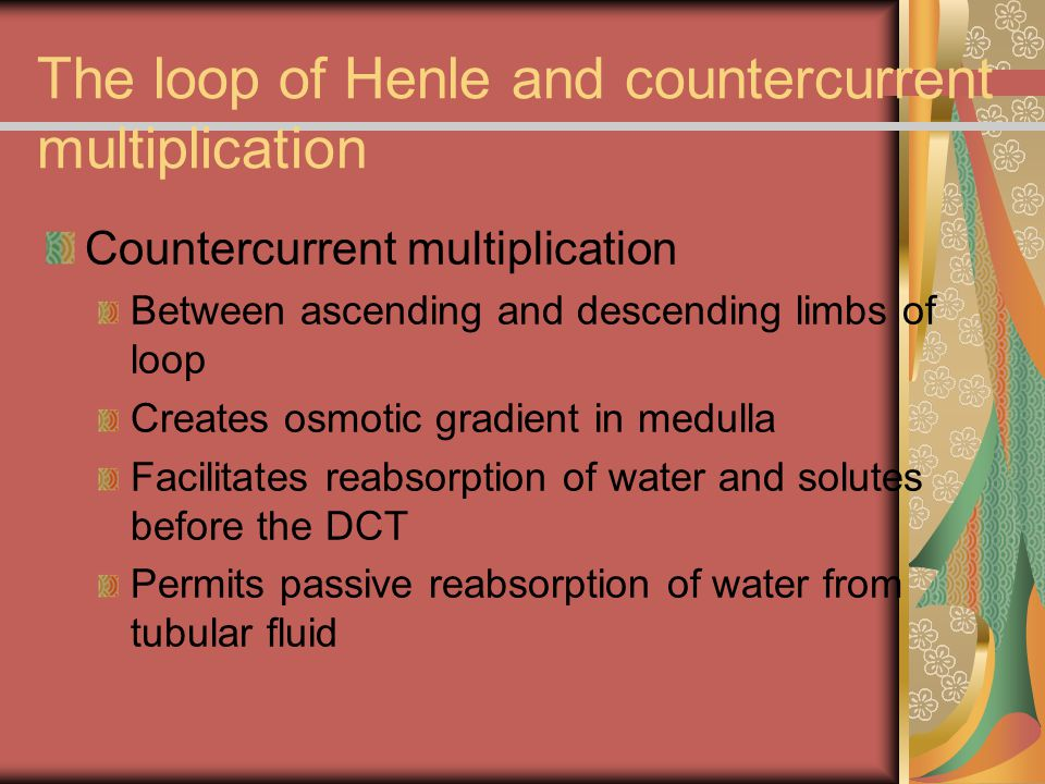 The loop of Henle and countercurrent multiplication Countercurrent multiplication Between ascending and descending limbs of loop Creates osmotic gradi