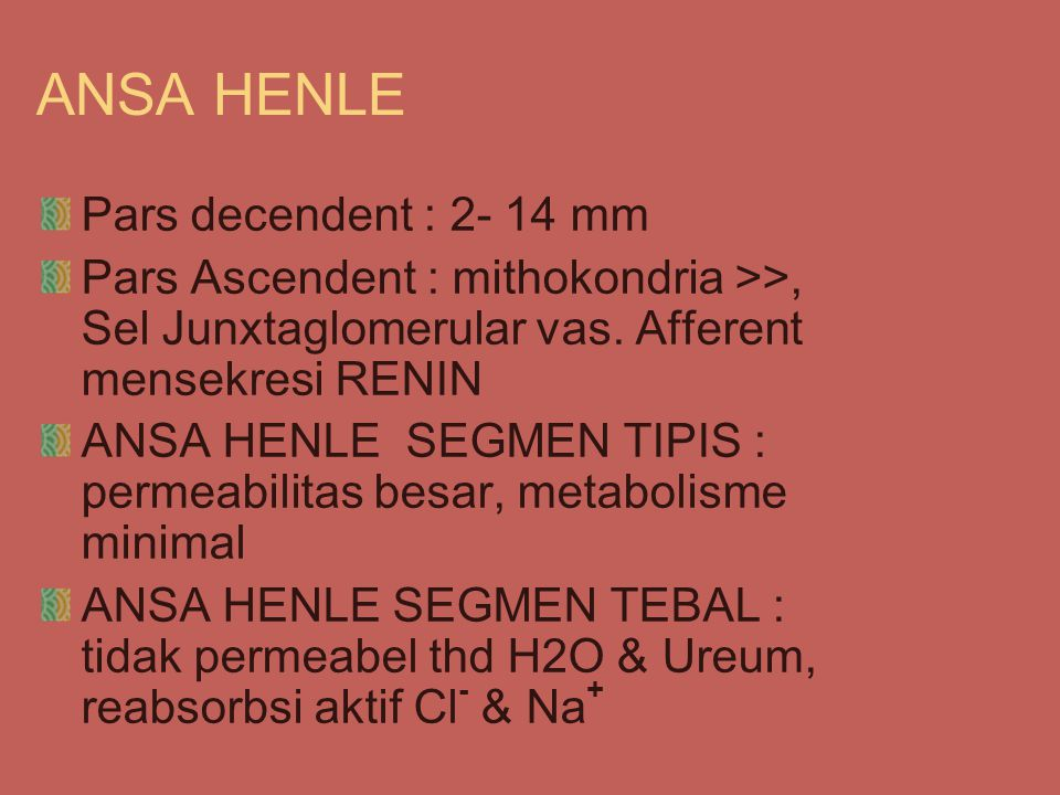ANSA HENLE Pars decendent : 2- 14 mm Pars Ascendent : mithokondria >>, Sel Junxtaglomerular vas.