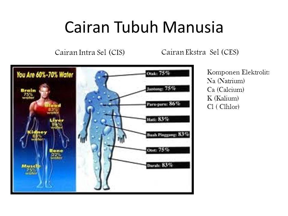 Cairan Tubuh Manusia Cairan Intra Sel (CIS) Cairan Ekstra Sel (CES) Komponen Elektrolit: Na (Natrium) Ca (Calcium) K (Kalium) Cl ( Clhlor)