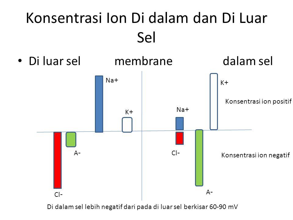 + -+ + + + + + + + + - - - - - - - - - - + + + - - - + + ++ + - - - - - - - - - - - + + + + + + Konsentrasi tinggi Konsentrasi rendah Membran permeabel ion K Berdifusi dari konsentrasi tinggi ke konsentrasi rendah Ion adalah atom yang bermuatan listrik, ion di tubuh Na, K, Cl, A-