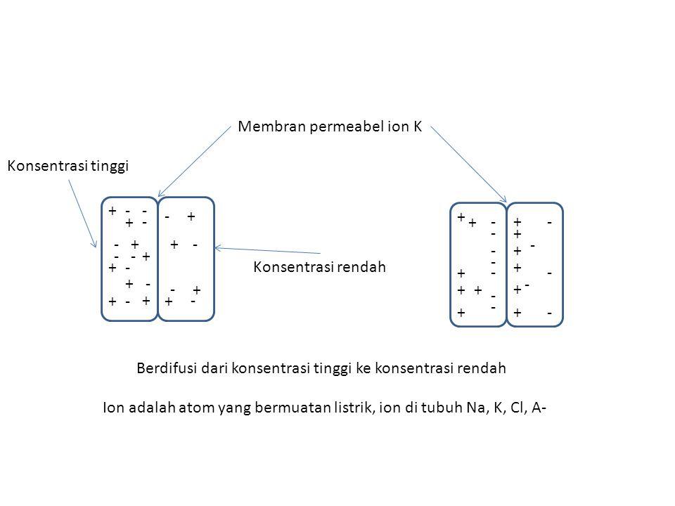 + -+ + + + + + + + + - - - - - - - - - - + + + - - - + + ++ + - - - - - - - - - - - + + + + + + Konsentrasi tinggi Konsentrasi rendah Membran permeabe