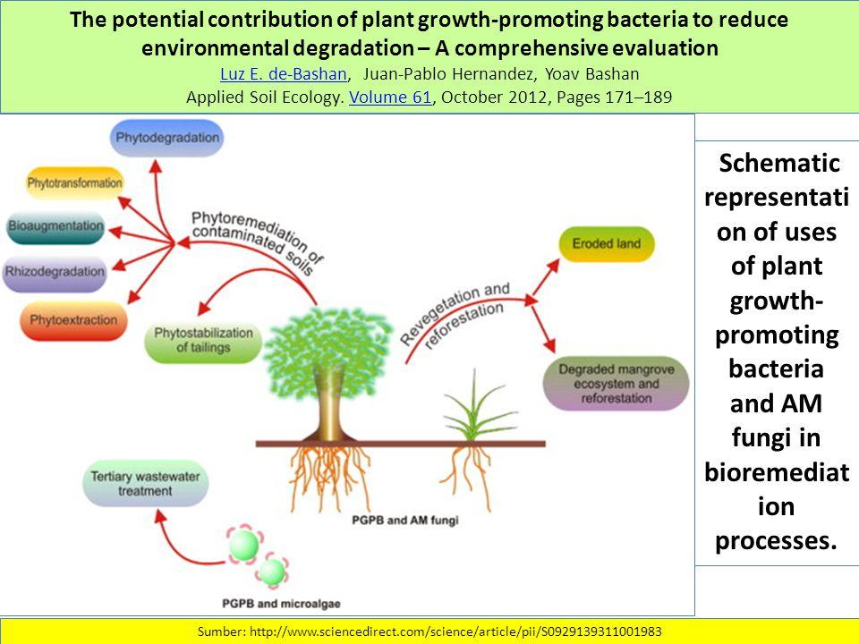 The potential contribution of plant growth-promoting bacteria to reduce environmental degradation – A comprehensive evaluation Luz E. de-BashanLuz E.