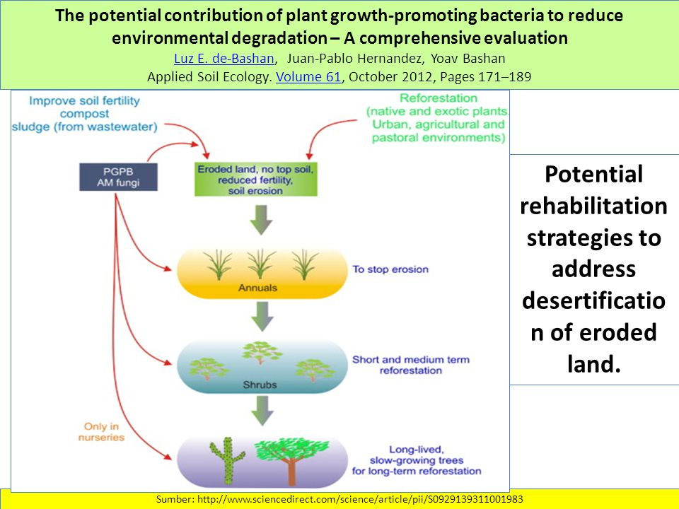 The potential contribution of plant growth-promoting bacteria to reduce environmental degradation – A comprehensive evaluation Luz E.