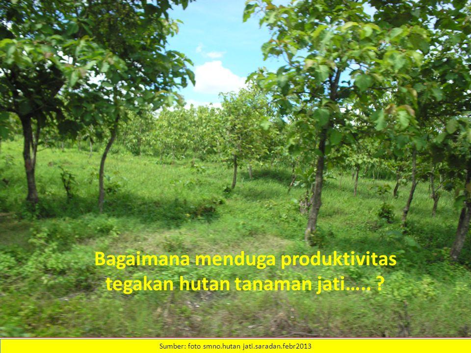 Sumber: foto smno.hutan jati.saradan.febr2013 Bagaimana menduga produktivitas tegakan hutan tanaman jati…..