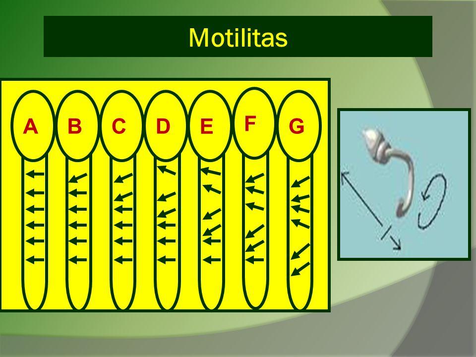 Motilitas E BCA D F G