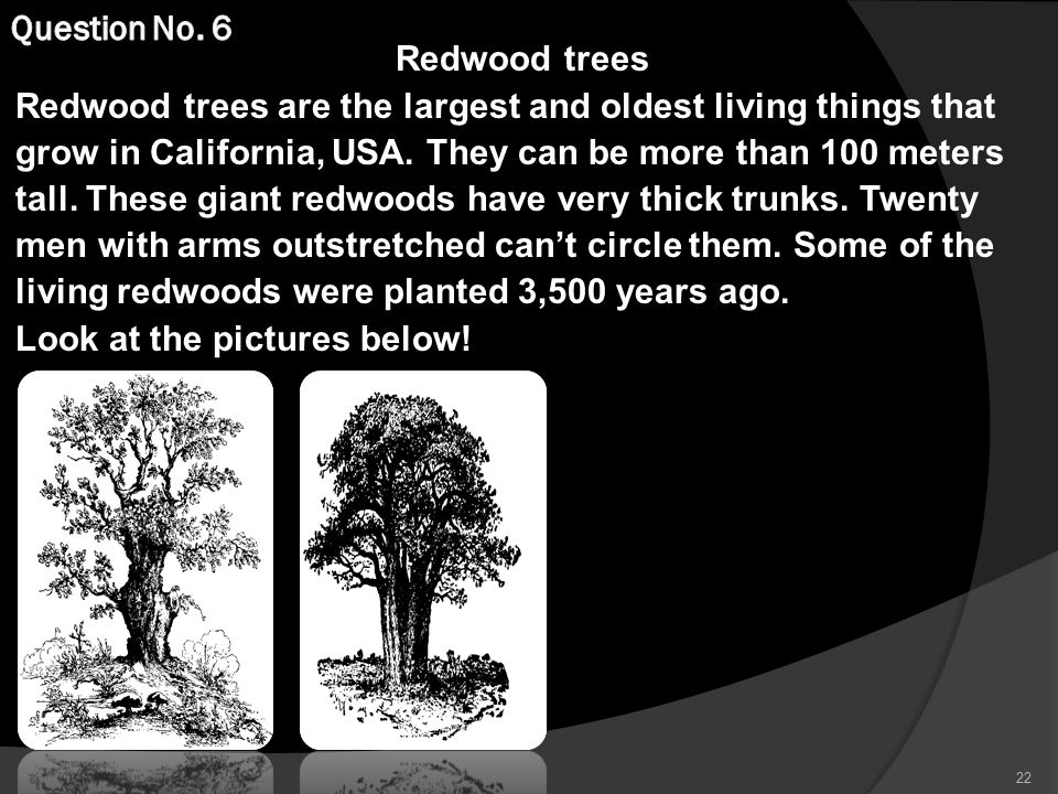 Redwood trees Redwood trees are the largest and oldest living things that grow in California, USA.