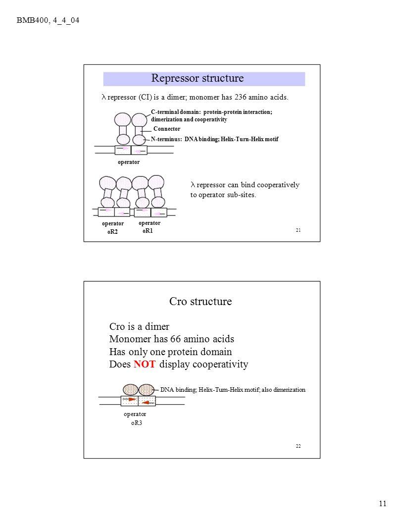 21 operator oR1 oR2 BMB400, 4_4_04 Repressor structure  repressor (CI) is a dimer; monomer has 236 amino acids.