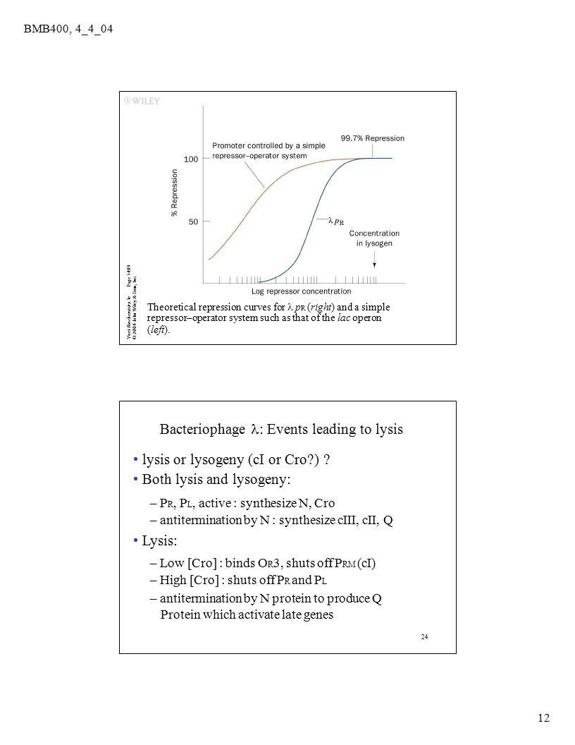 Page 1409 Voet Biochemistry 3e© 2004 John Wiley & Sons, Inc. BMB400, 4_4_04 12 Theoretical repression curves for  p R (right) and a simple repressor–