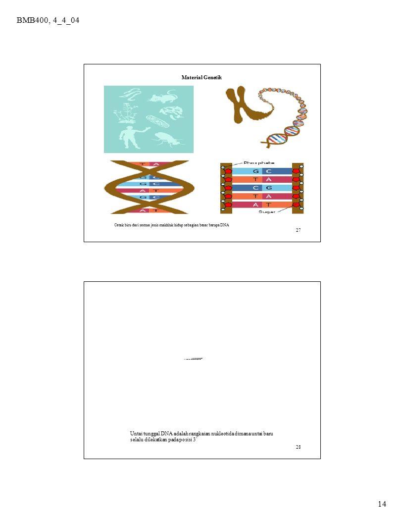 BMB400, 4_4_04 14 27 Material Genetik Cetak biru dari semua jenis makhluk hidup sebagian besar berupa DNA 28 QuickTimeý Dz TIFFÅiLZWÅj êLí£ÉvÉçÉOÉâÉÄ