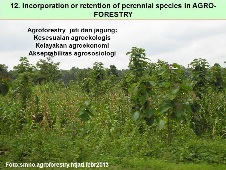 12. Incorporation or retention of perennial species in AGRO- FORESTRY Agroforestry jati dan jagung: Kesesuaian agroekologis Kelayakan agroekonomi Akse