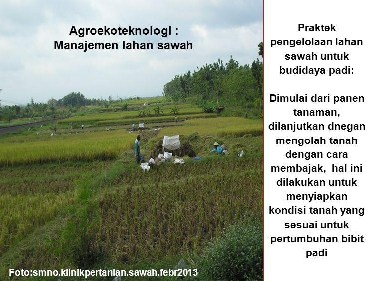 Praktek pengelolaan lahan sawah untuk budidaya padi: Dimulai dari panen tanaman, dilanjutkan dnegan mengolah tanah dengan cara membajak, hal ini dilak