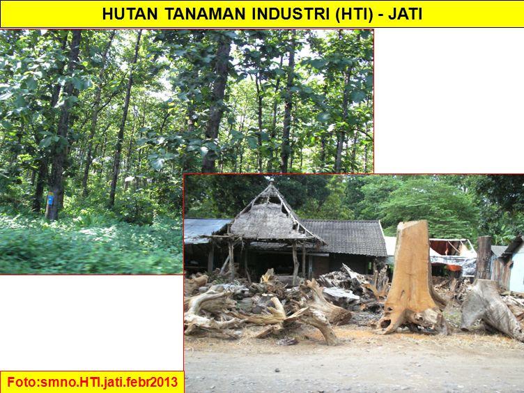 HUTAN TANAMAN INDUSTRI (HTI) - JATI Foto:smno.HTI.jati.febr2013