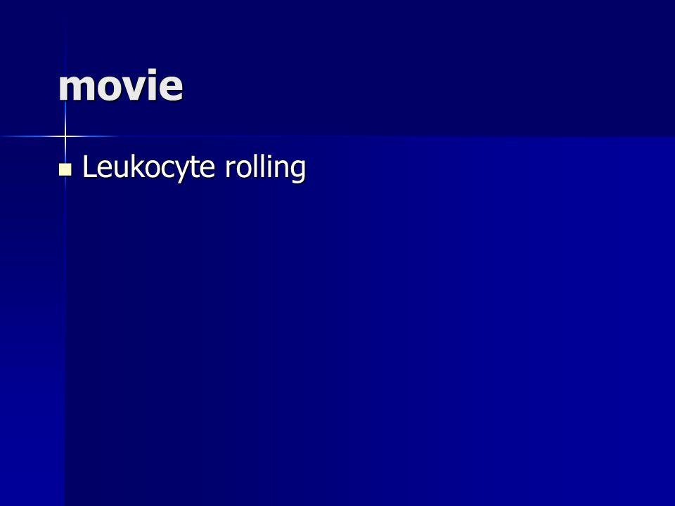 movie Leukocyte rolling Leukocyte rolling