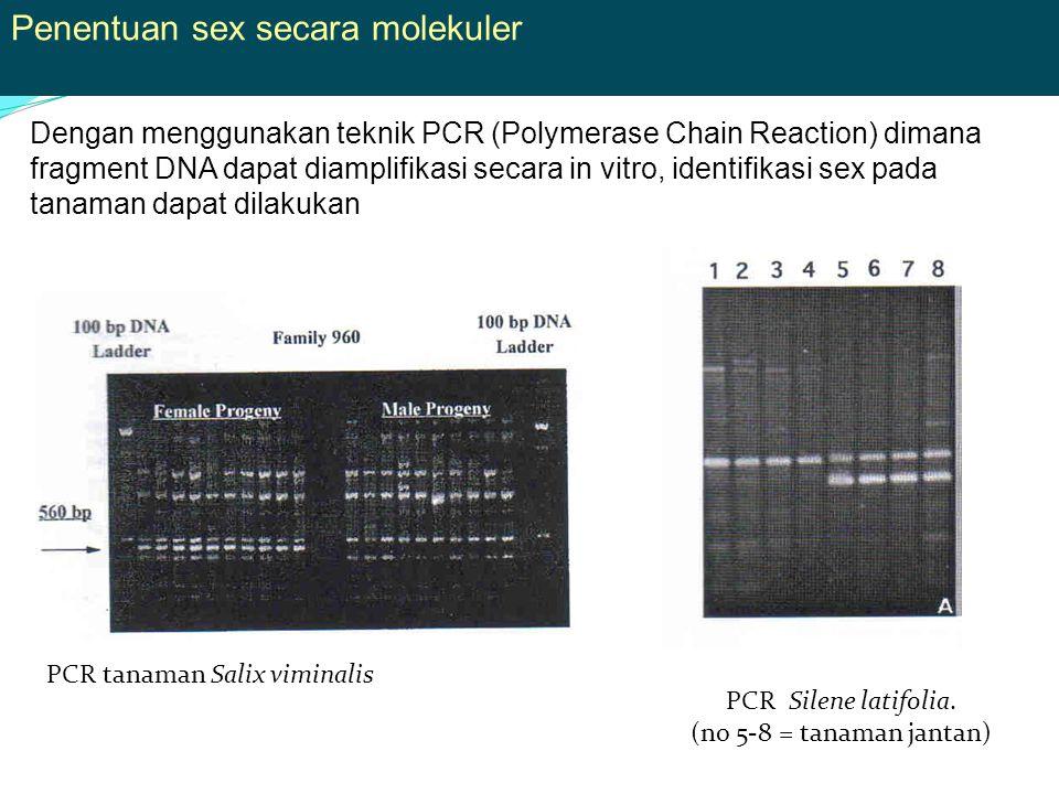 Penentuan sex secara molekuler Dengan menggunakan teknik PCR (Polymerase Chain Reaction) dimana fragment DNA dapat diamplifikasi secara in vitro, identifikasi sex pada tanaman dapat dilakukan PCR tanaman Salix viminalis PCR Silene latifolia.