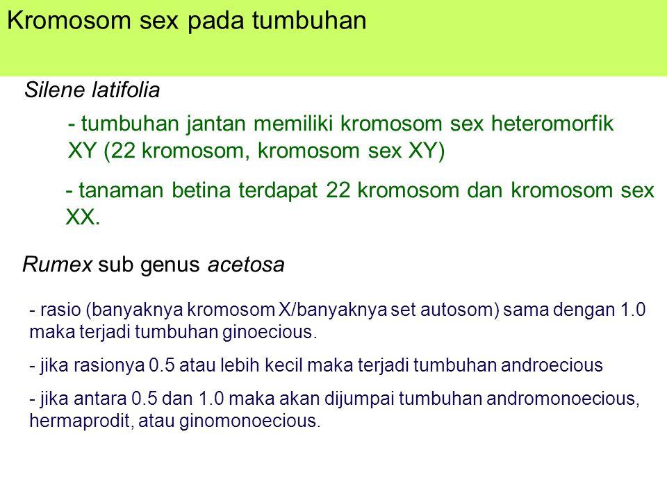 Kromosom sex pada tumbuhan Silene latifolia - tumbuhan jantan memiliki kromosom sex heteromorfik XY (22 kromosom, kromosom sex XY) - tanaman betina terdapat 22 kromosom dan kromosom sex XX.