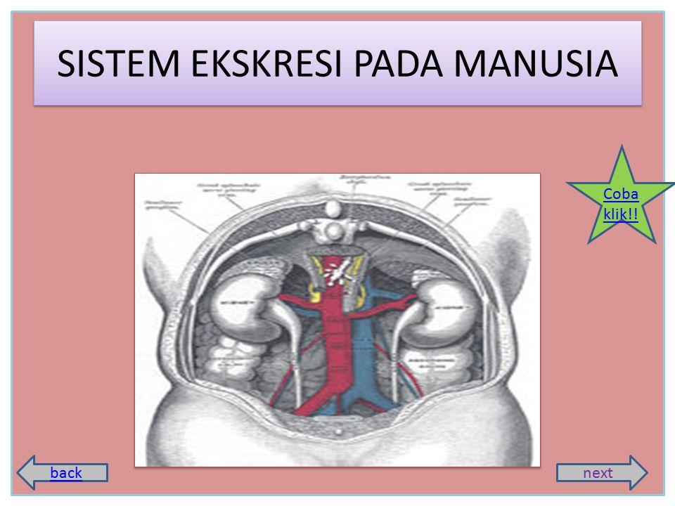 SISTEM EKSKRESI PADA MANUSIA backnext Coba klik!!