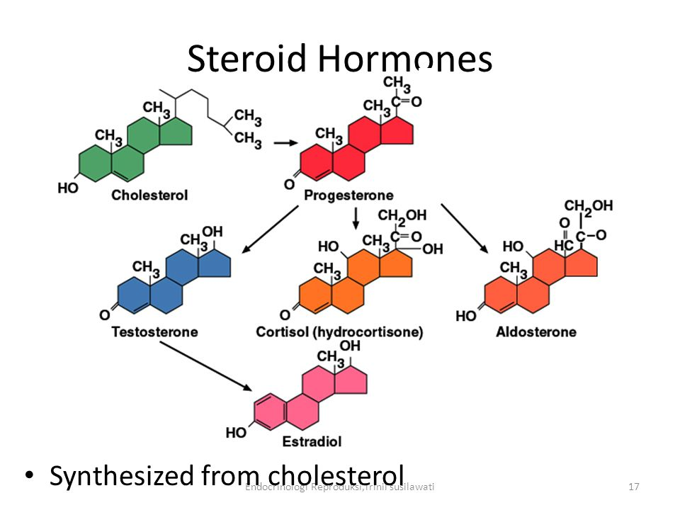 Endocrinologi Reproduksi,Trinil susilawati17 Steroid Hormones Synthesized from cholesterol