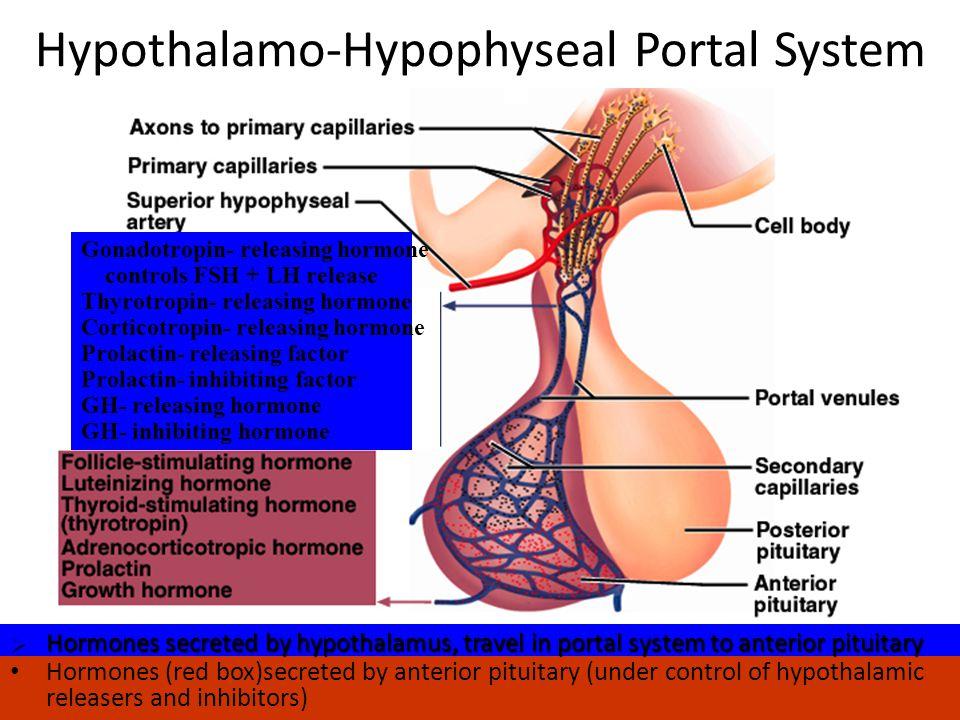 Endocrinologi Reproduksi,Trinil susilawati7 Hypothalamus 1.Gonadotropin releasing Hormone (Gn-RH)  Menstimulasi keluarnya FSH dan LH 2.