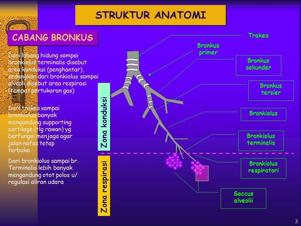 3 Trakea Bronkus primer Bronkus sekunder Bronkiolus terminalis Saccus alveolii Zona konduksi Zona respirasi Bronkus tersier Bronkiolus Bronkiolus respiratori Dari lubang hidung sampai bronkiolus terminalis disebut area konduksi (penghantar), sedangkan dari bronkiolus sampai alveoli disebut area respirasi (tempat pertukaran gas) Dari bronkiolus sampai br.