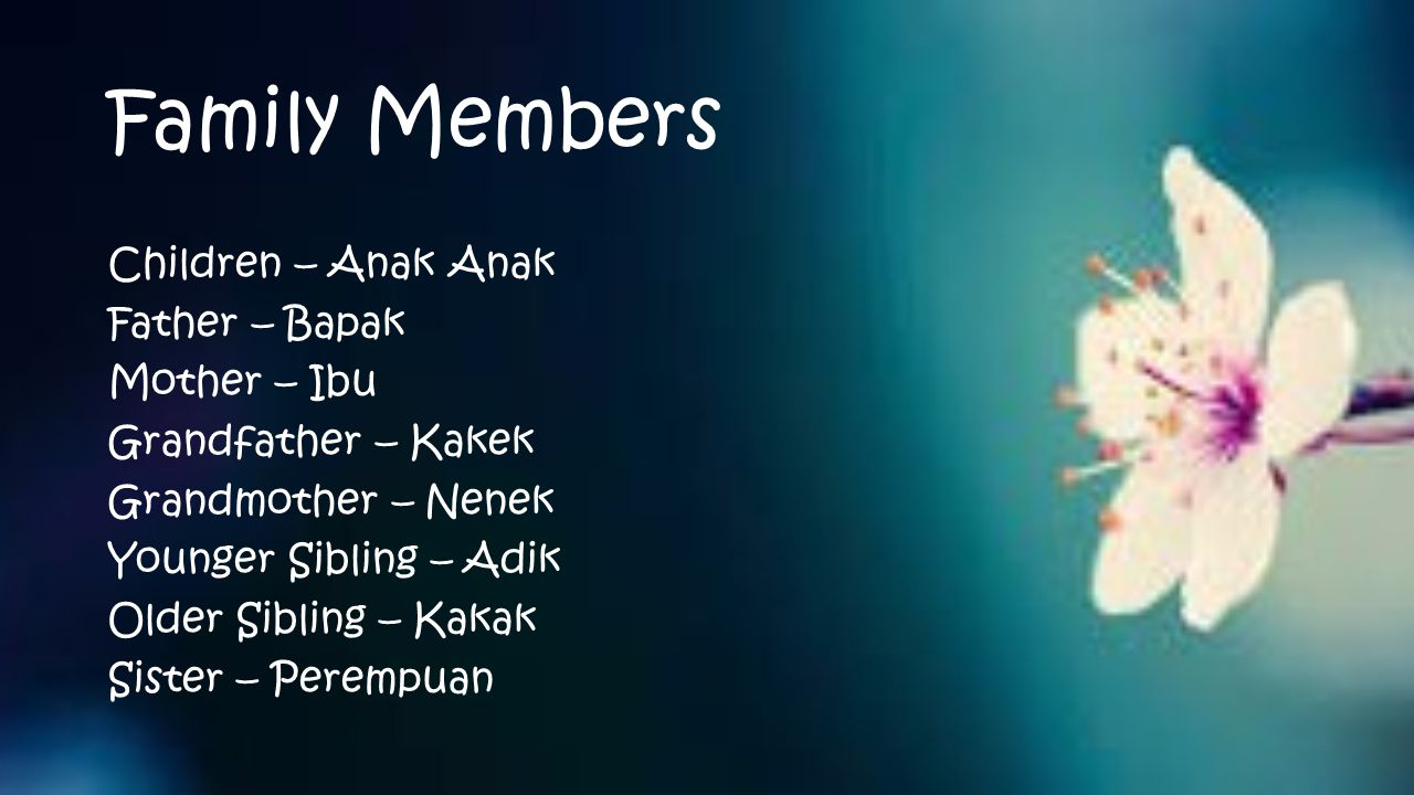 Family Members Children – Anak Anak Father – Bapak Mother – Ibu Grandfather – Kakek Grandmother – Nenek Younger Sibling – Adik Older Sibling – Kakak Sister – Perempuan