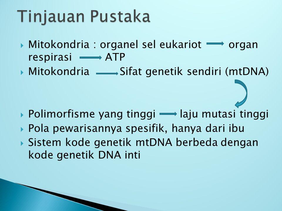  Mitokondria : organel sel eukariot organ respirasi ATP  Mitokondria Sifat genetik sendiri (mtDNA)  Polimorfisme yang tinggi laju mutasi tinggi  Pola pewarisannya spesifik, hanya dari ibu  Sistem kode genetik mtDNA berbeda dengan kode genetik DNA inti