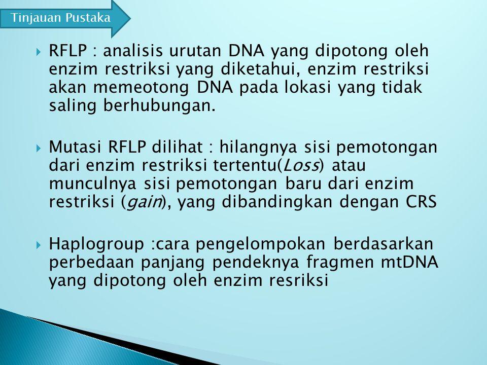  RFLP : analisis urutan DNA yang dipotong oleh enzim restriksi yang diketahui, enzim restriksi akan memeotong DNA pada lokasi yang tidak saling berhubungan.