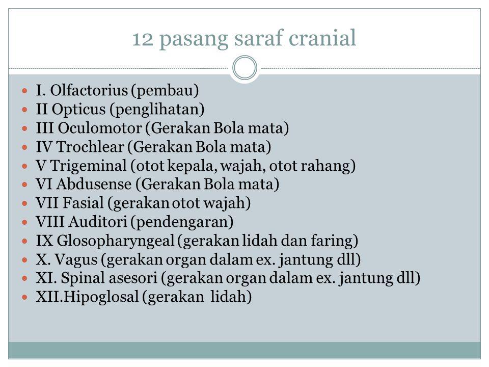 Saraf sadar terdiri atas 12 pasang saraf cranial (menuju ke otak) dan 31 pasang saraf spinal (menuju ke sumsum tulang belakang) 12 pasang saraf cranial meliputi: 3 pasang saraf sensorik, 5 pasang saraf motorik, dan 4 pasang saraf gabungan 31 pasang Saraf spinal (menuju sumsum tulang belakang) Berdasarkan asalnya, saraf sumsum tulang belakang dibedakan atas 8 pasang saraf leher, 12 pasang saraf punggung, 5 pasang saraf pinggang, 5 pasang saraf pinggul, dan satu pasang saraf ekor.
