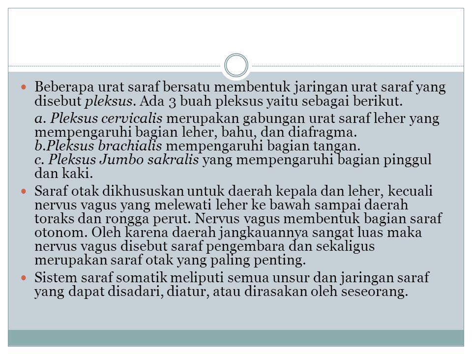 12 pasang saraf cranial I.