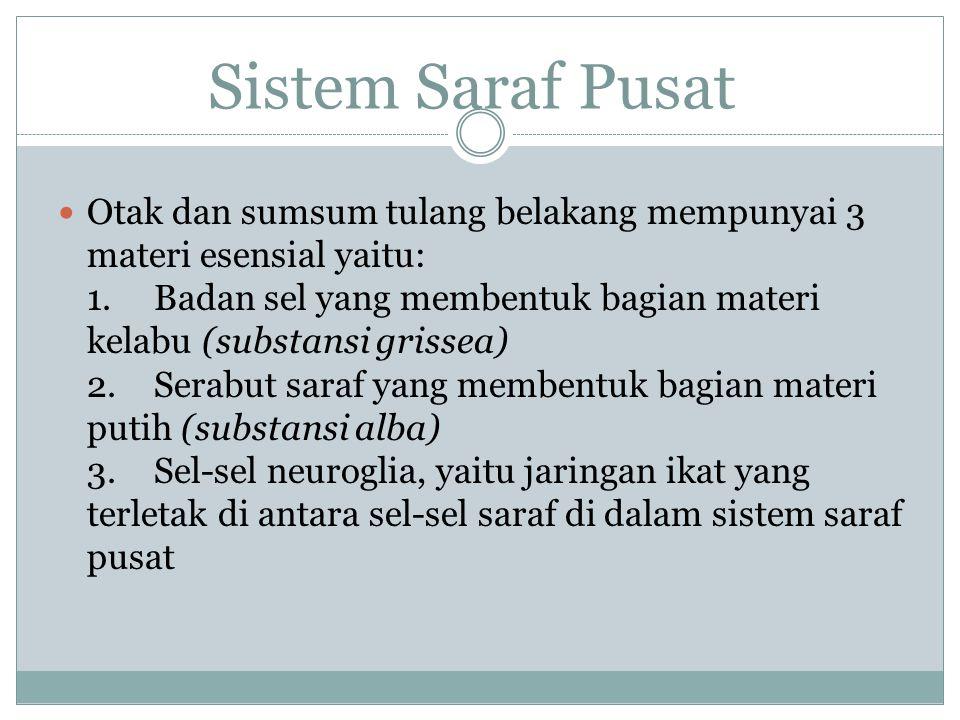 Sistem Saraf Pusat Sistem saraf pusat meliputi otak (ensefalon) dan sumsum tulang belakang (Medula spinalis).