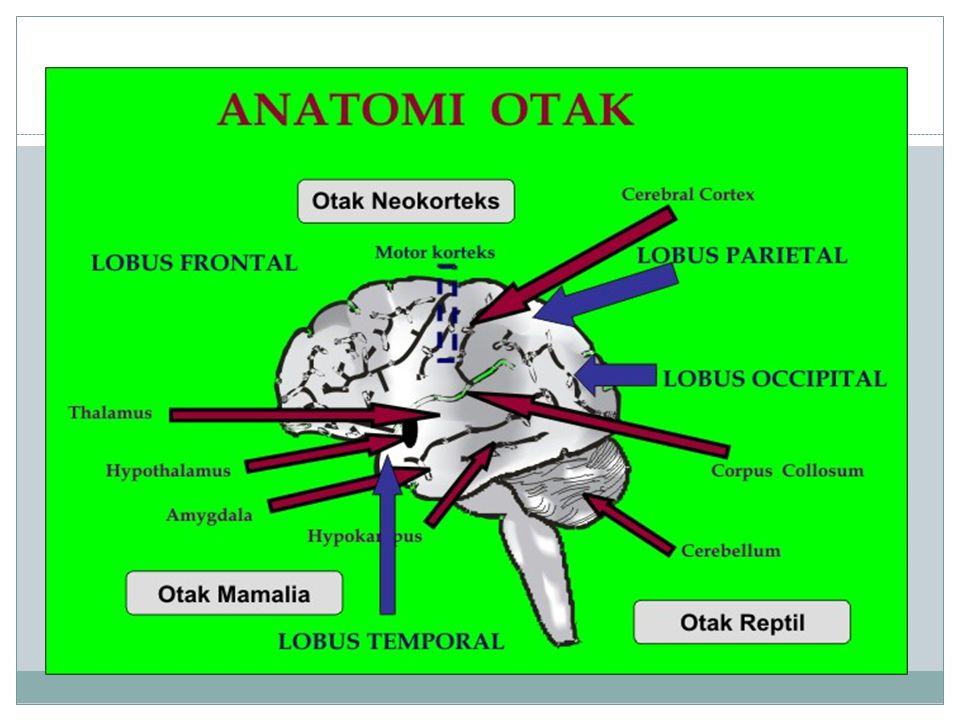Otak Otak (bahasa Inggris: encephalon) adalah pusat sistem saraf pada vertebrata dan banyak invertebrata lainnya.bahasa Inggrissistem sarafvertebratainvertebrata Otak mengatur dan mengkordinir sebagian besar, gerakan, perilaku dan fungsi tubuh homeostasis seperti detak jantung, tekanan darah, keseimbangan cairan tubuh dan suhu tubuh.
