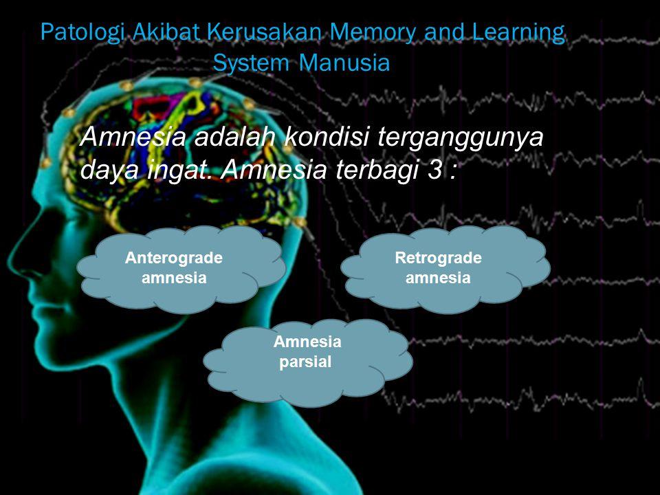 Patologi Akibat Kerusakan Memory and Learning System Manusia Amnesia adalah kondisi terganggunya daya ingat.