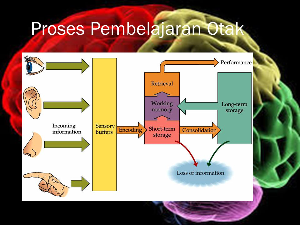 Proses Pembelajaran Otak
