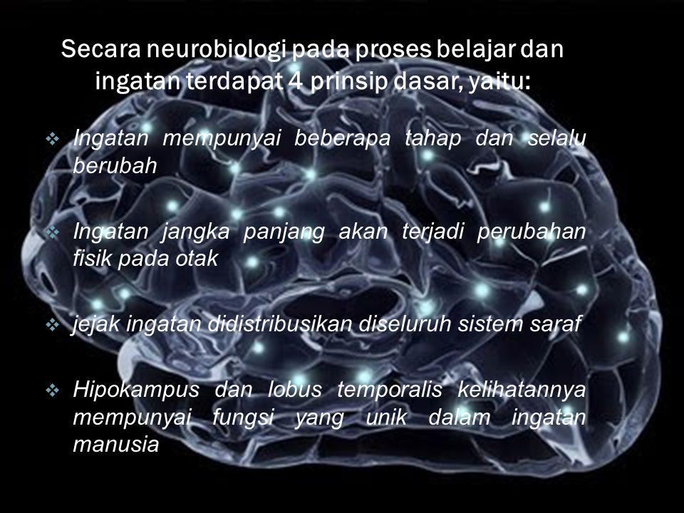 Secara neurobiologi pada proses belajar dan ingatan terdapat 4 prinsip dasar, yaitu:  Ingatan mempunyai beberapa tahap dan selalu berubah  Ingatan jangka panjang akan terjadi perubahan fisik pada otak  jejak ingatan didistribusikan diseluruh sistem saraf  Hipokampus dan lobus temporalis kelihatannya mempunyai fungsi yang unik dalam ingatan manusia