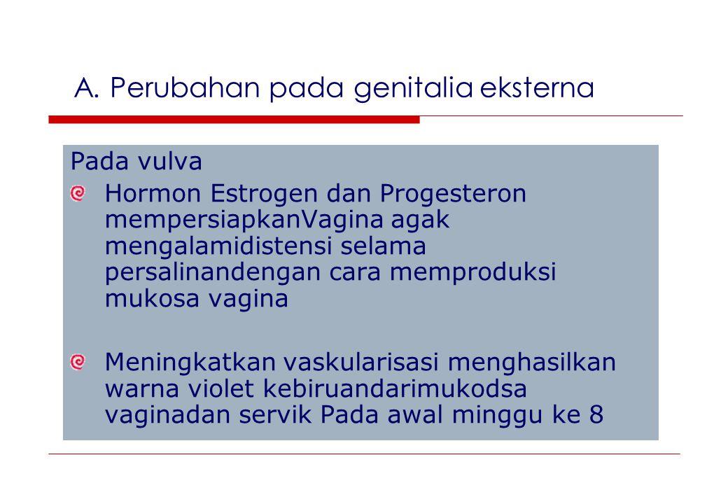 A. Perubahan pada genitalia eksterna Pada vulva Hormon Estrogen dan Progesteron mempersiapkanVagina agak mengalamidistensi selama persalinandengan car