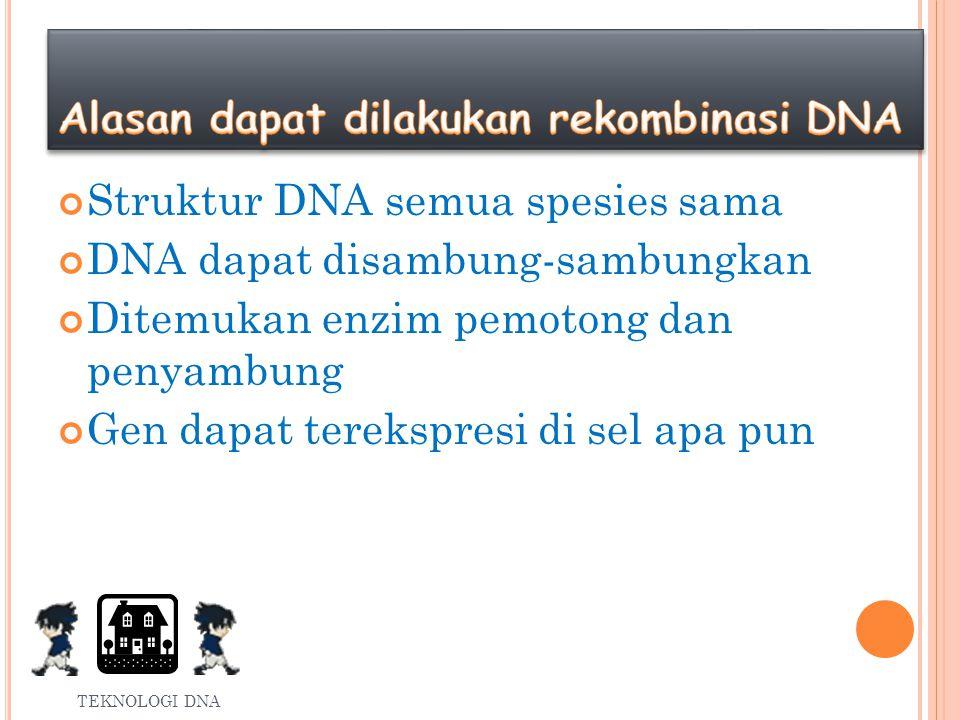 MACAM REKOMBINASI DNA Rekombinasi DNA terbagi menjadi: Alami : pindah silang, transduksi, transformasi Buatan : penyambungan DNA secara in vitro TEKNOLOGI DNA
