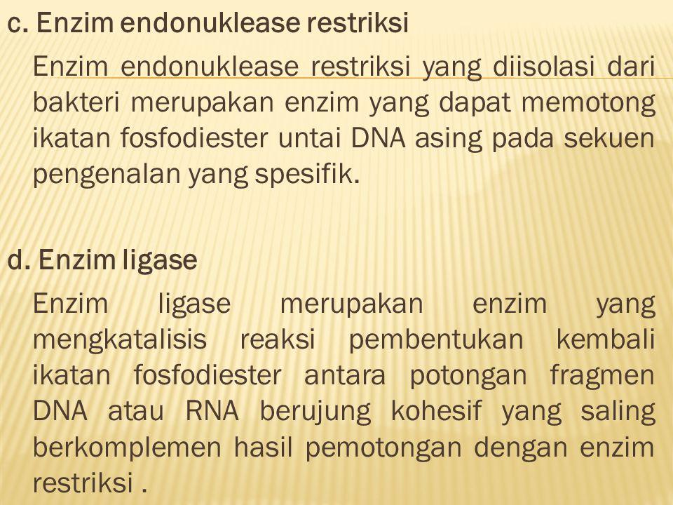 c. Enzim endonuklease restriksi Enzim endonuklease restriksi yang diisolasi dari bakteri merupakan enzim yang dapat memotong ikatan fosfodiester untai