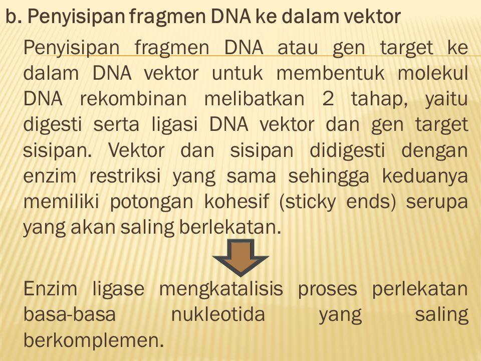 b. Penyisipan fragmen DNA ke dalam vektor Penyisipan fragmen DNA atau gen target ke dalam DNA vektor untuk membentuk molekul DNA rekombinan melibatkan