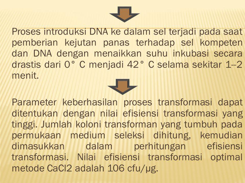 Proses introduksi DNA ke dalam sel terjadi pada saat pemberian kejutan panas terhadap sel kompeten dan DNA dengan menaikkan suhu inkubasi secara drast