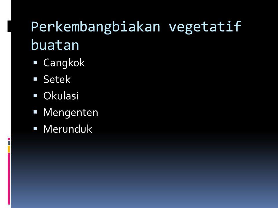 Perkembangbiakan vegetatif buatan CCangkok SSetek OOkulasi MMengenten MMerunduk