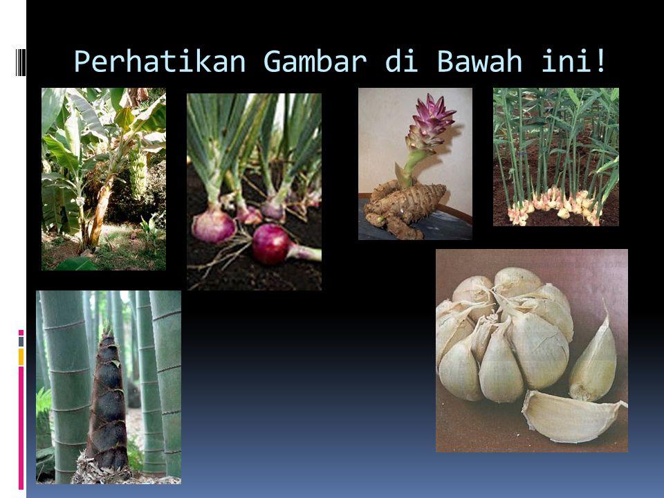 Apakah pohon pisang membutuhkan bantuan manusia untuk menumbuhkan tunasnya.