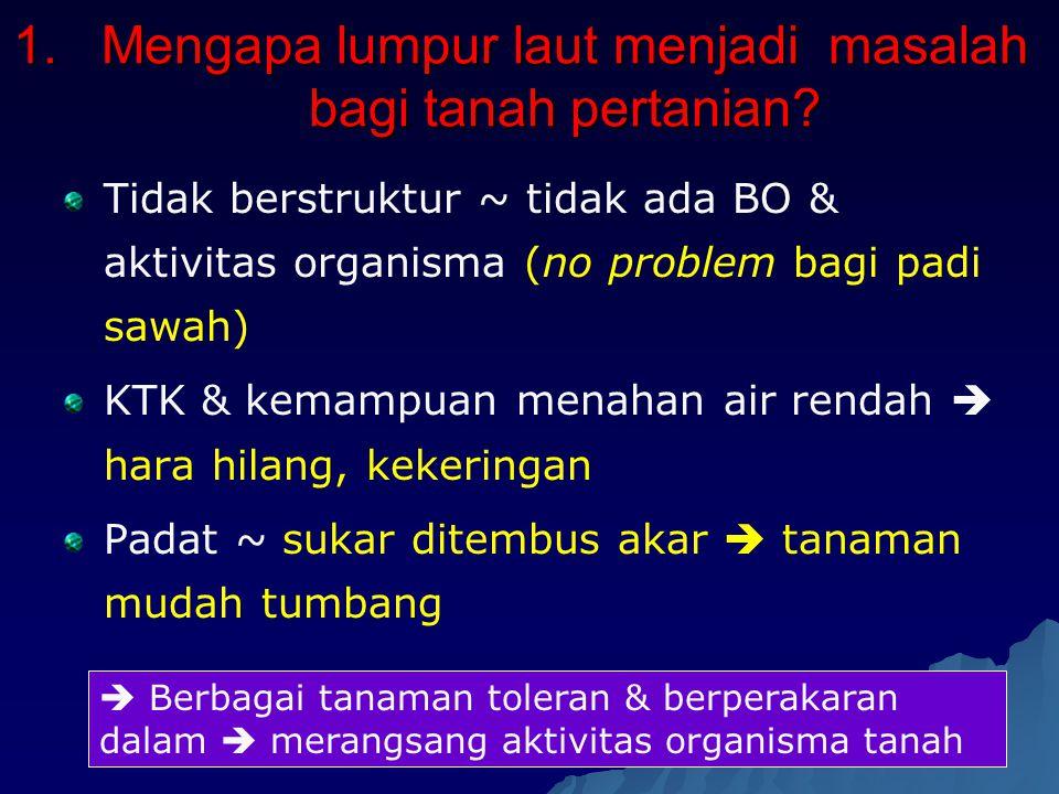 1.Mengapa lumpur laut menjadi masalah bagi tanah pertanian? Tidak berstruktur ~ tidak ada BO & aktivitas organisma (no problem bagi padi sawah) KTK &