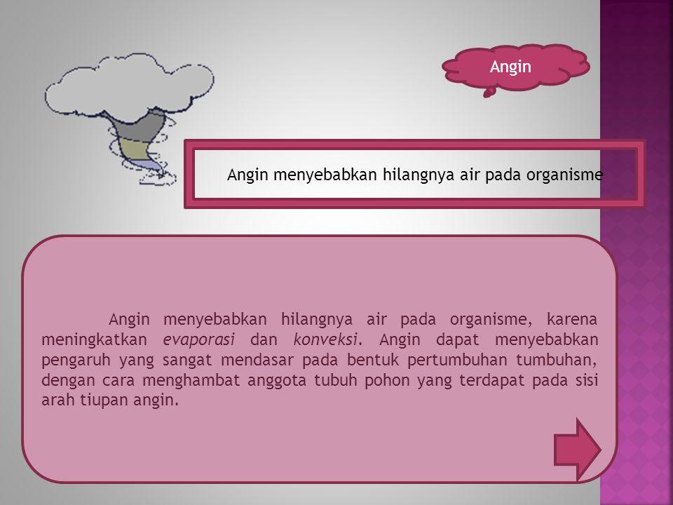 Angin Angin menyebabkan hilangnya air pada organisme Angin menyebabkan hilangnya air pada organisme, karena meningkatkan evaporasi dan konveksi.