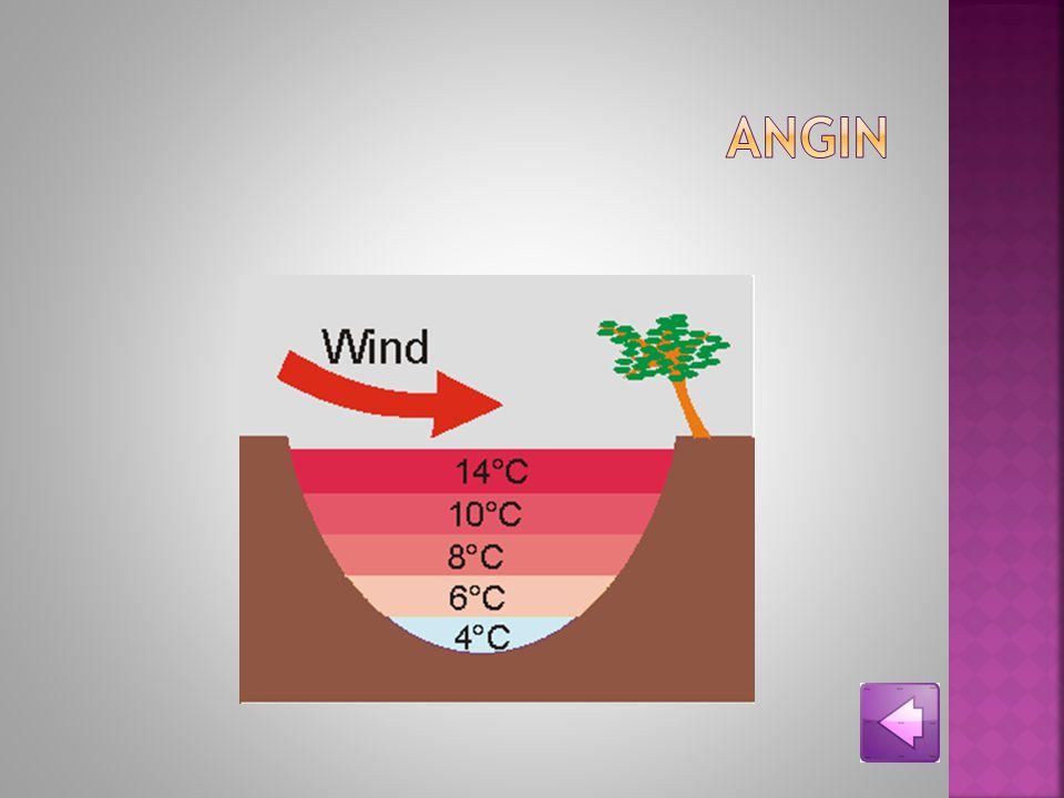 Angin Angin menyebabkan hilangnya air pada organisme Angin menyebabkan hilangnya air pada organisme, karena meningkatkan evaporasi dan konveksi. Angin