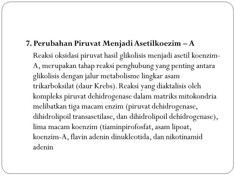 7. Perubahan Piruvat Menjadi Asetilkoezim – A Reaksi oksidasi piruvat hasil glikolisis menjadi asetil koenzim- A, merupakan tahap reaksi penghubung ya