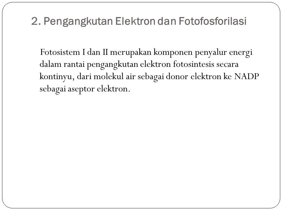 2. Pengangkutan Elektron dan Fotofosforilasi Fotosistem I dan II merupakan komponen penyalur energi dalam rantai pengangkutan elektron fotosintesis se