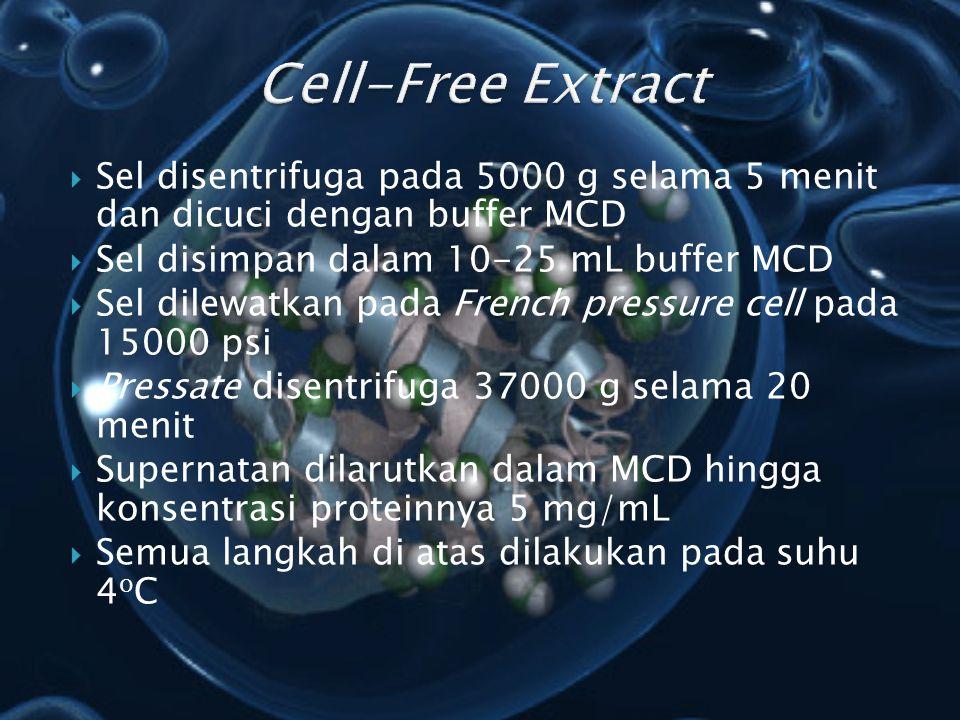  Sel disentrifuga pada 5000 g selama 5 menit dan dicuci dengan buffer MCD  Sel disimpan dalam 10-25 mL buffer MCD  Sel dilewatkan pada French press